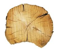 Tree trunk cut. Photo of a tree trunk cut across Stock Image