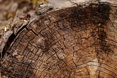Tree trunk cut Stock Photos