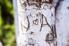 Tree trunk with cut-out word. Close-up of word carved on bark of tree trunk in bright sunlight stock photo