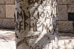 Tree trunk with cut-out word. Close-up of word carved on bark of tree trunk in bright sunlight royalty free stock photography
