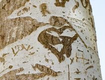 Tree trunk with cut-out word. Close-up of word carved on bark of tree trunk in bright sunlight royalty free stock image