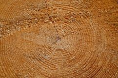Tree trunk cut. With crack Royalty Free Stock Photos
