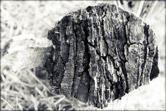 Tree trunk Cut. Wallpaper monochrome black and white  ruin Stock Photo