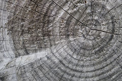 Tree trunk cuts showing growth rings Stock Photography
