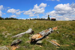 Tree trunk debris. At mountain near the sheepfold Stock Image