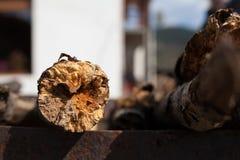 Tree trunk - detail Stock Photos