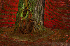 Tree trunk Stock Photos