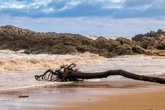 Tree trunk died on a beach Royalty Free Stock Photos