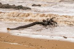 Tree trunk died on a beach Stock Image