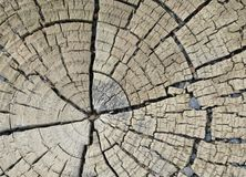 Dissected tree trunk Royalty Free Stock Images