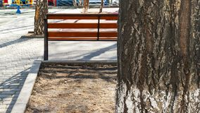 Tree Trunk, Empty Bench at the Paved Kids Playground Area in the Park on a Spring Afternoon with Long Shadows.  stock photos