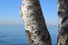 Tree trunk with engraved letters Stock Images