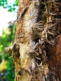 Tree trunk entwined with ivy vines in the garden. Tree trunk entwined with ivy vines close up royalty free stock photography