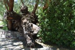 Tree trunk fallen over circular stone tree pot, 1. stock images