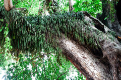 Tree trunk with fern Stock Image