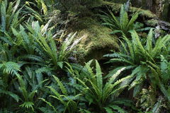 Tree trunk with ferns Stock Photos