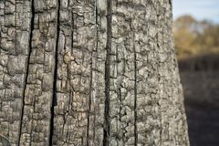 Tree trunk after the Fire Royalty Free Stock Photos