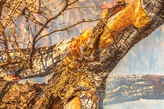Tree trunk in flame royalty free stock image
