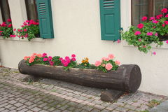 Tree Trunk Flower Box Royalty Free Stock Image