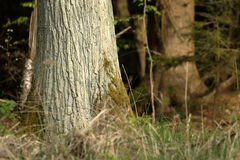 Tree trunk in the forest Stock Photo