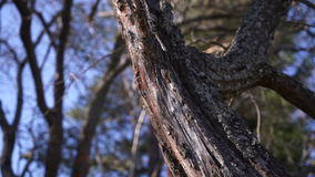 The tree trunk in the forest closeup. The tree trunk in the forest stock video footage