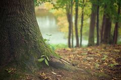 Tree Trunk, Forest Floor, Trunk Royalty Free Stock Images