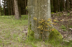 Tree trunk in forest Stock Photos