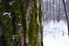 moss tree trunk forest winter snow stock photo