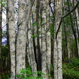 Tree trunk in forest Stock Photography