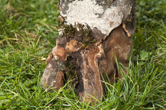 Tree trunk on grass Stock Photography