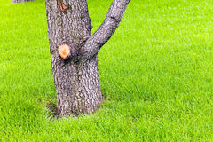 Tree trunk in the grass. In nature Royalty Free Stock Photos