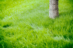 Tree trunk on grass in spring Royalty Free Stock Photo