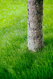 Tree trunk on grass in spring Stock Images