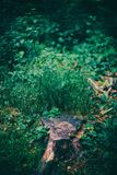 Tree trunk in green bushes in the forest. stock photos