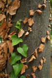 Tree trunk with green and fry leaves Stock Image