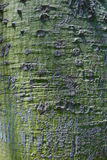 Tree trunk . Green lines of an  old tree trunk Royalty Free Stock Photos