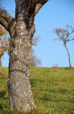 Tree trunk Stock Photos