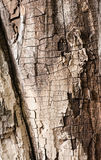 Tree trunk Grey and brown textured Stock Image