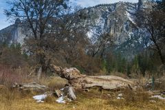 Tree trunk in Yosemite Park. Tree trunk in the ground in the middle of a field at Yosemite National Park in California, USA Stock Images