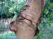A tree trunk growing through a wire fence Royalty Free Stock Image