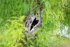 Tree Trunk with a Heart Shaped Hollow Stock Image