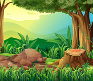 The tree trunk. Illustration of the tree trunk Stock Images
