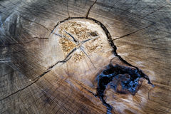 Free Tree Trunk In Cross Section Royalty Free Stock Images - 65894669