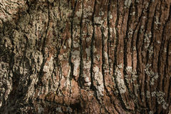 Tree trunk with lichen Stock Images