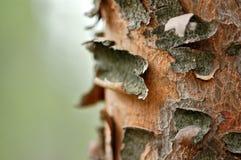 Tree trunk macro Royalty Free Stock Photos
