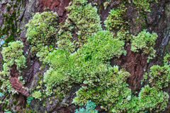 Tree trunk with moss Royalty Free Stock Images