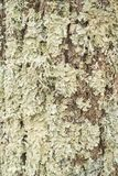 Tree trunk with moss Royalty Free Stock Photography