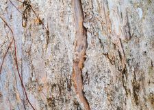 Tree trunk nature. bark texture pattern wood for background image horizontal stock images