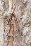 Tree trunk nature. bark texture pattern wood for background image vertical stock photo