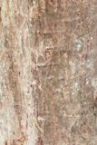 Tree trunk nature. bark texture pattern wood for background image vertical royalty free stock image